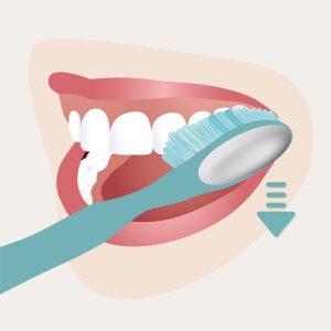 Zahnpflege - Schritt 2 _Zahnaussenflächen