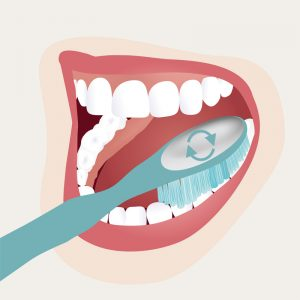 Zahnpflege - Schritt 4 _Kauflächen