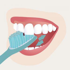 Zahnpflege – Schritt 3 _Zahninnenflächen